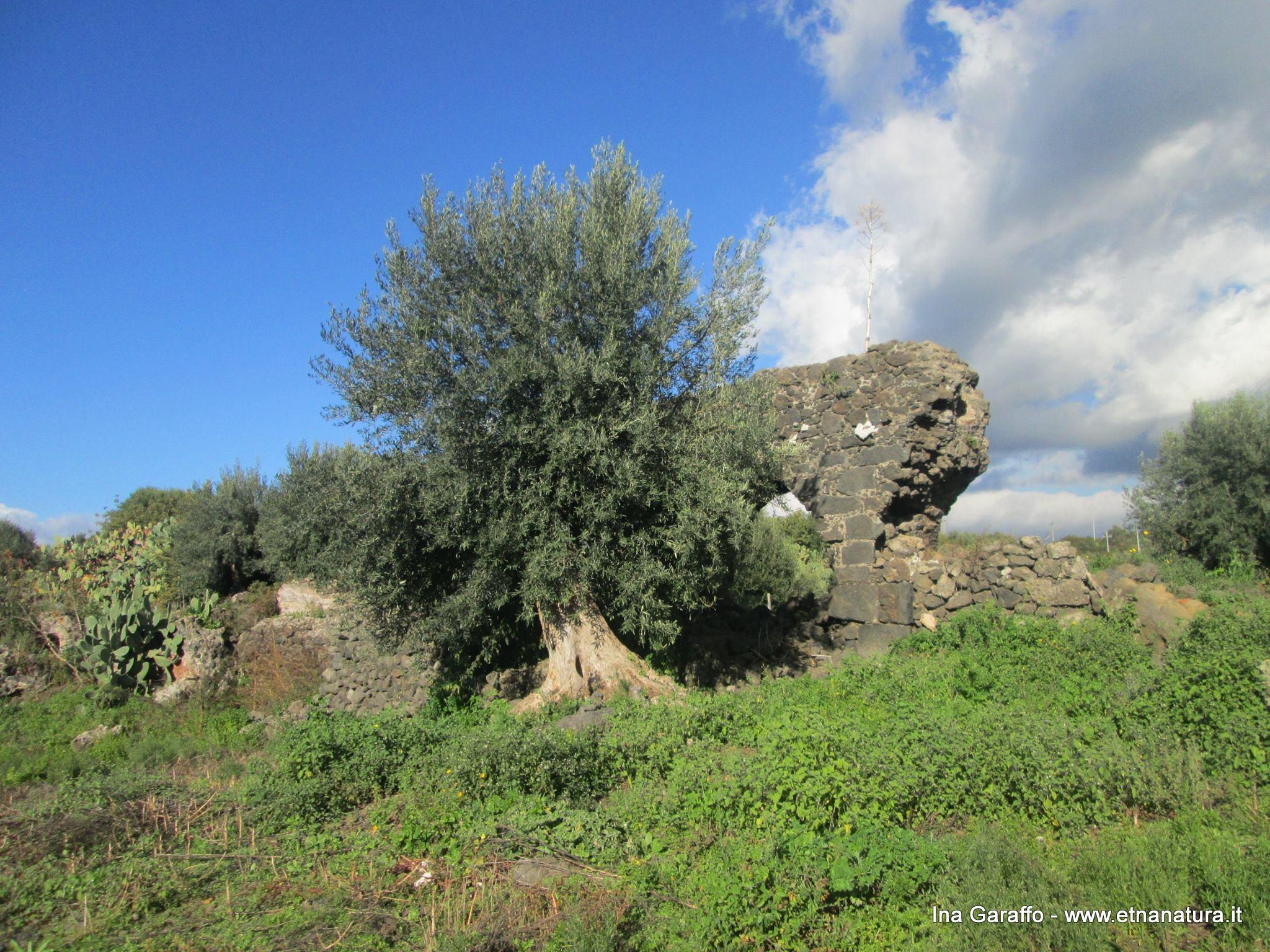 Acquedotto romano Scalilli