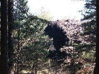 ../foto/all/Grotta Corruccio - 20100402 005