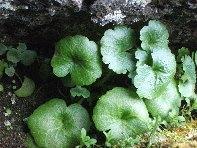 ../foto/all/Grotta Corruccio - 20100402 029