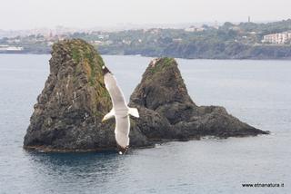 Isole dei Ciclopi: 681 visite da giugno 2018