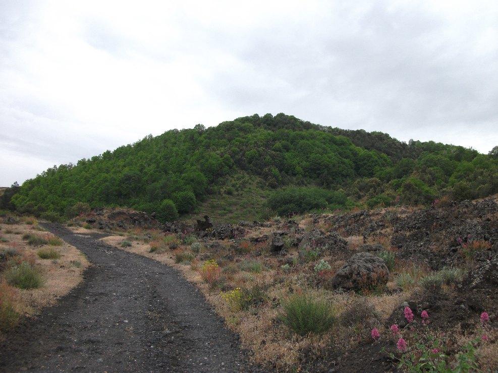 Monte Arcimis