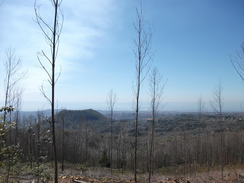 Monte Cicirello