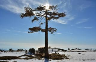 Monte Conca: 2219 visite da giugno 2018