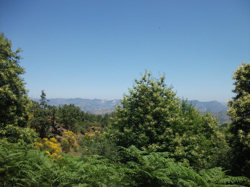 Monte Crisimo
