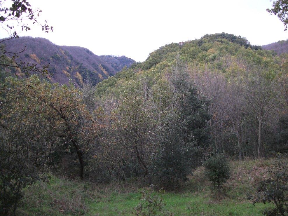 Monte Fior di Cosimo