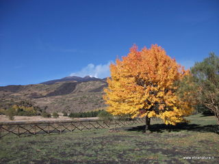 Monte Vetore: 78 visite nel mese di Ottobre