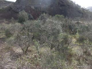 Monterosso: 1558 visite da giugno 2018