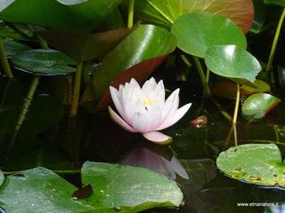 Orto botanico Catania: 1457 visite da giugno 2018