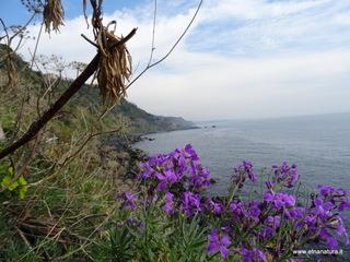 Pietra Monaca: 2 visite oggi