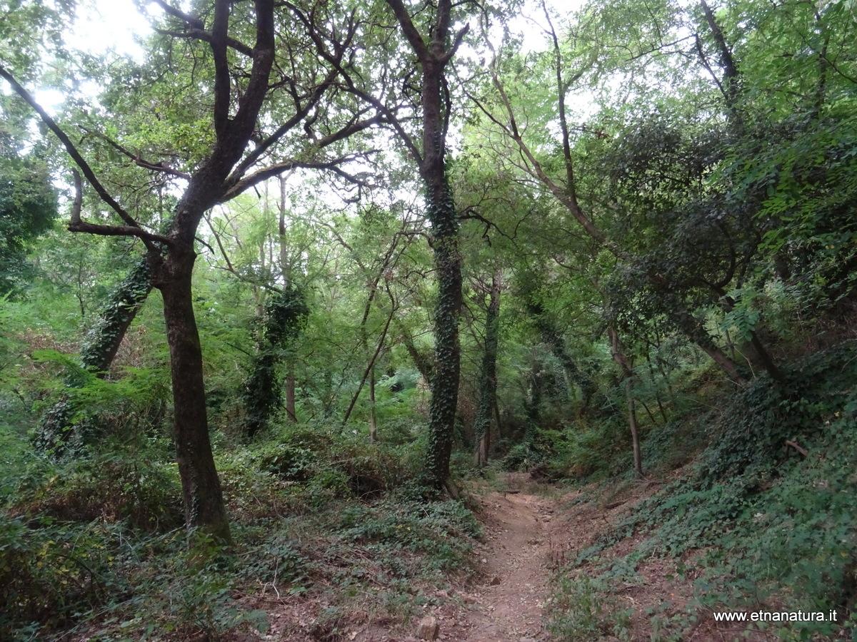 Sentiero Badiazza