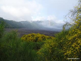 Val Calanna: 1402 visite nel 2020