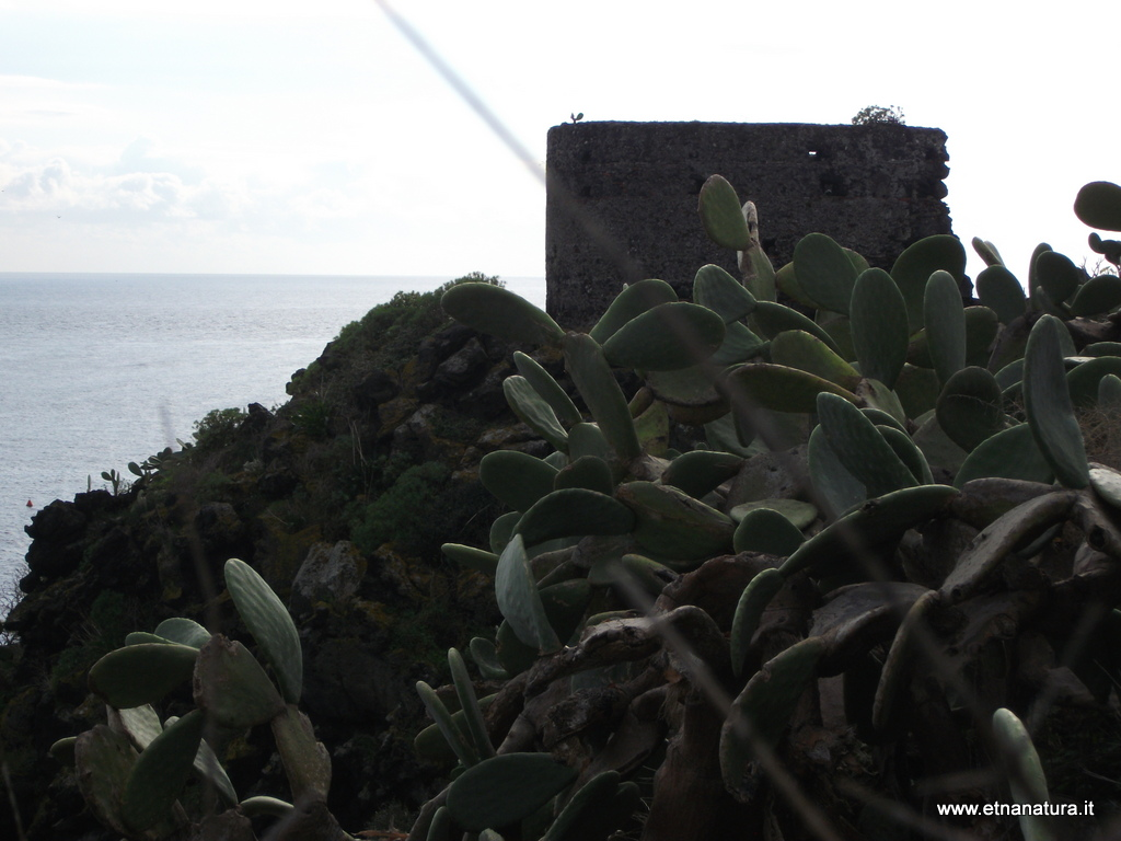 Torre Alessandrano