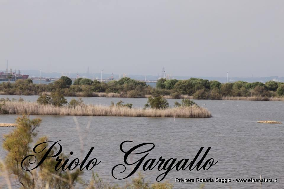 Priolo Gargallo